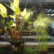 acquatic plants 005